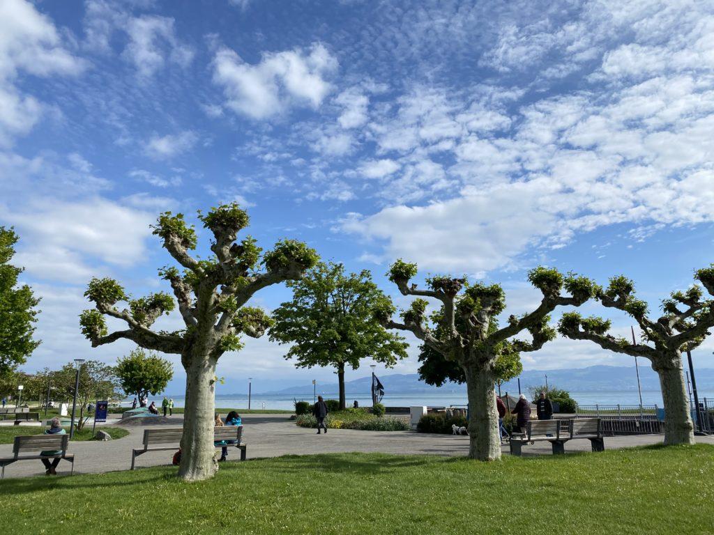 Bäume vor See - Nachhaltiges Reisen